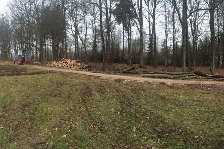 Brennholz 2014 / 2015